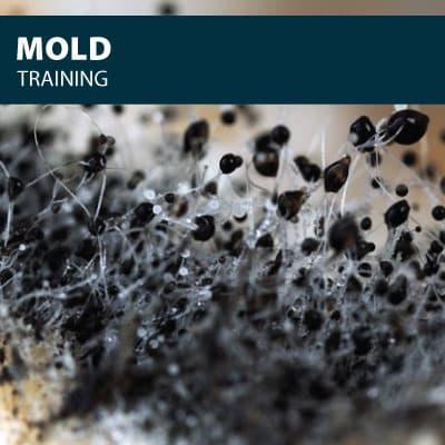 mold training certification
